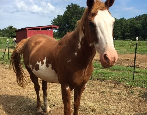Blue Skies of Mapleview: Healing through Horses