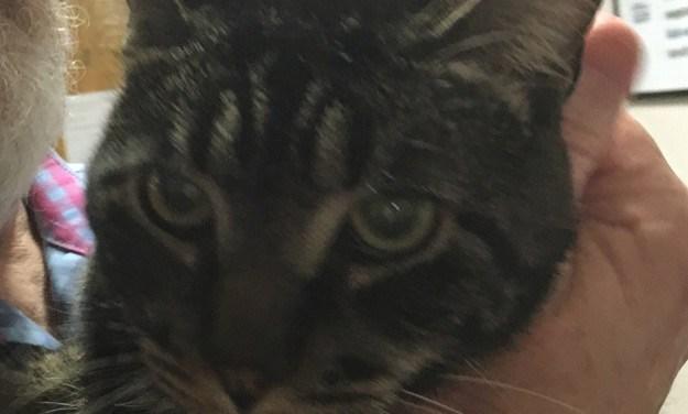 Adopt Cam: The Mellow, Curious Cat