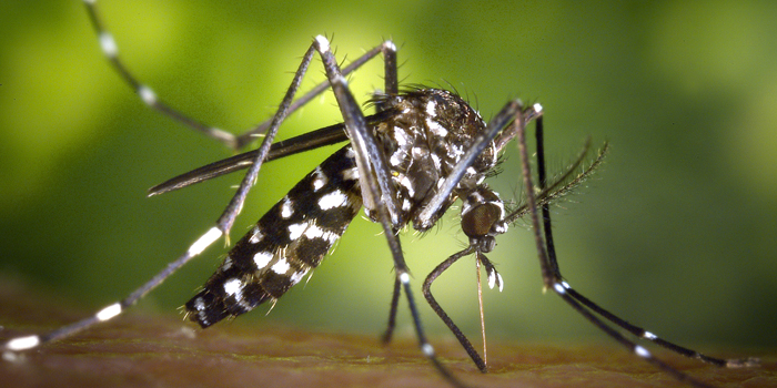 UNC-Chapel Hill Partners with CDC on Zika Virus Research