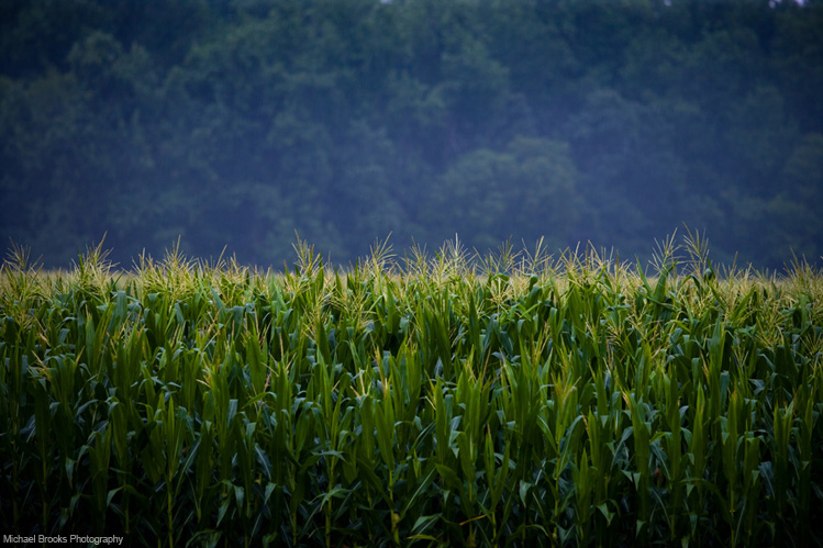 Local Officials Plan For Orange County's Rural Buffer