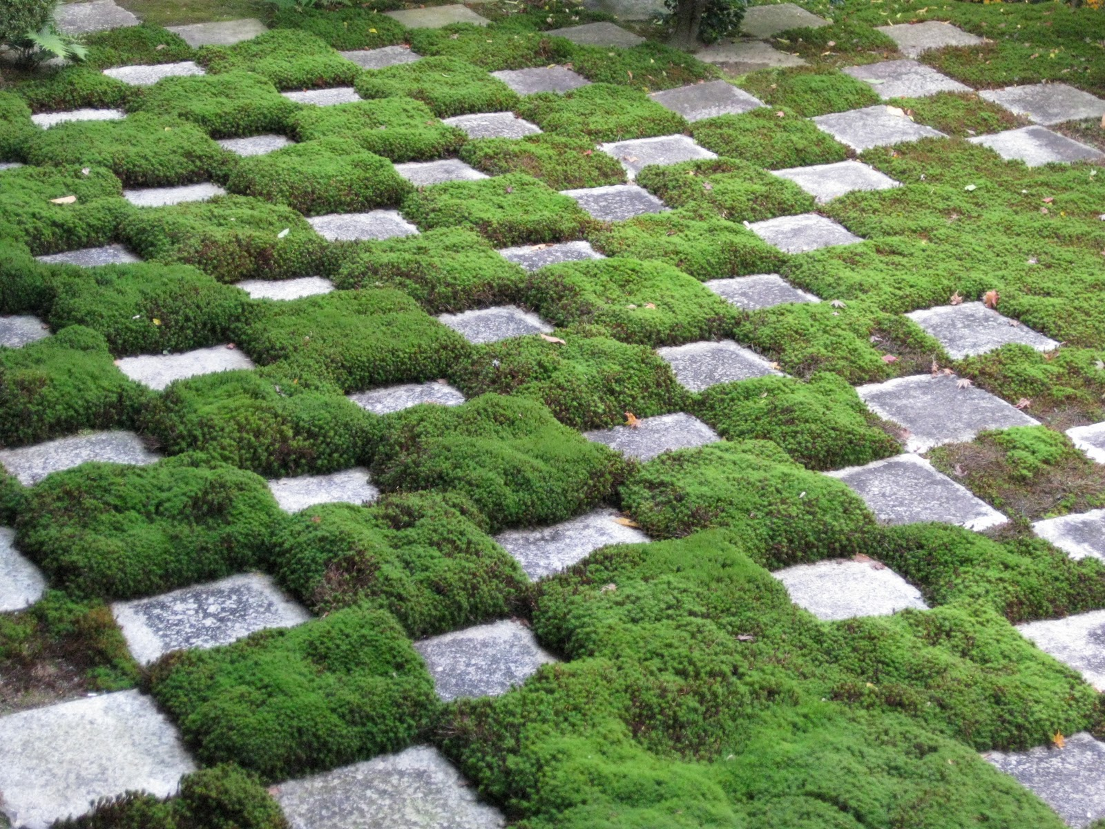 Ordinaire The Beauty Of Moss Gardening