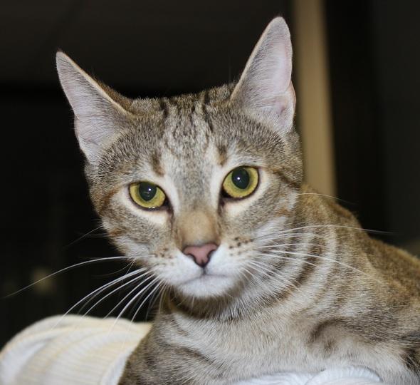 Adopt Juno: A Playful Ringleader