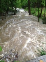 @Terri_Turner1 - Tom's Creek at Ashbrook Apartments in Carrboro