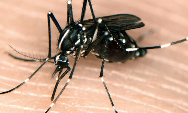 'Chikungunya' Mosquito Virus Appears in NC