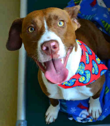 Adopt Kelsey: A Gentle Scamp