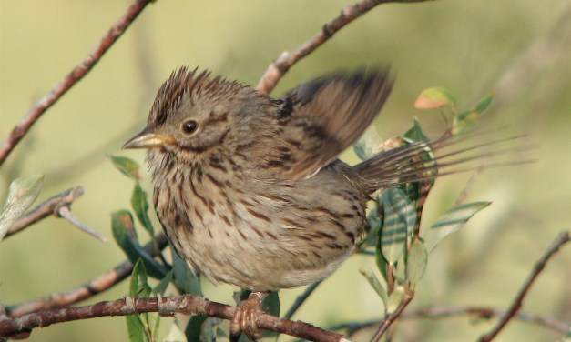 UNC Study: In Birds, As In Humans, Beauty Is Relative