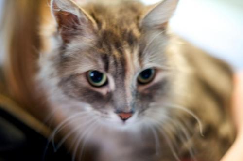 Adopt-a-Pet: Wendy