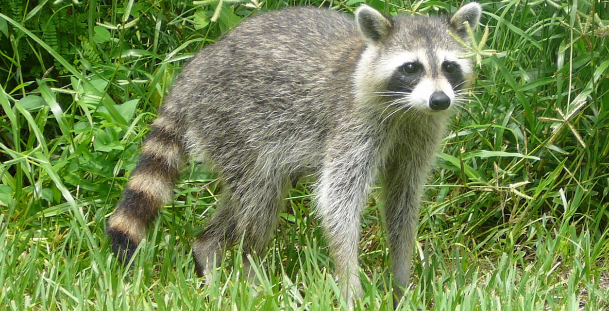 Orange County Receives 9th Rabies Confirmation of 2017