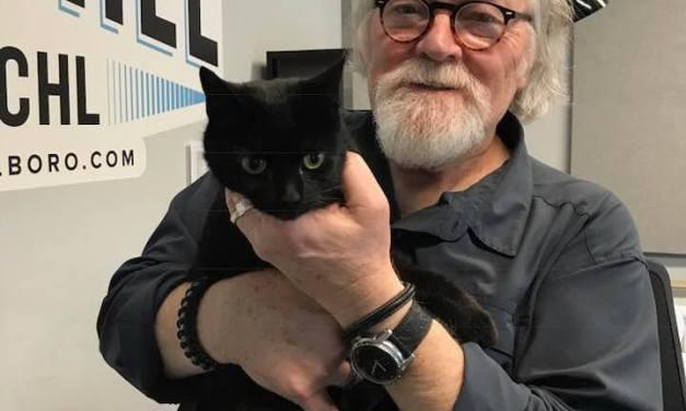 Adopt-A-Pet: Cat Benatar
