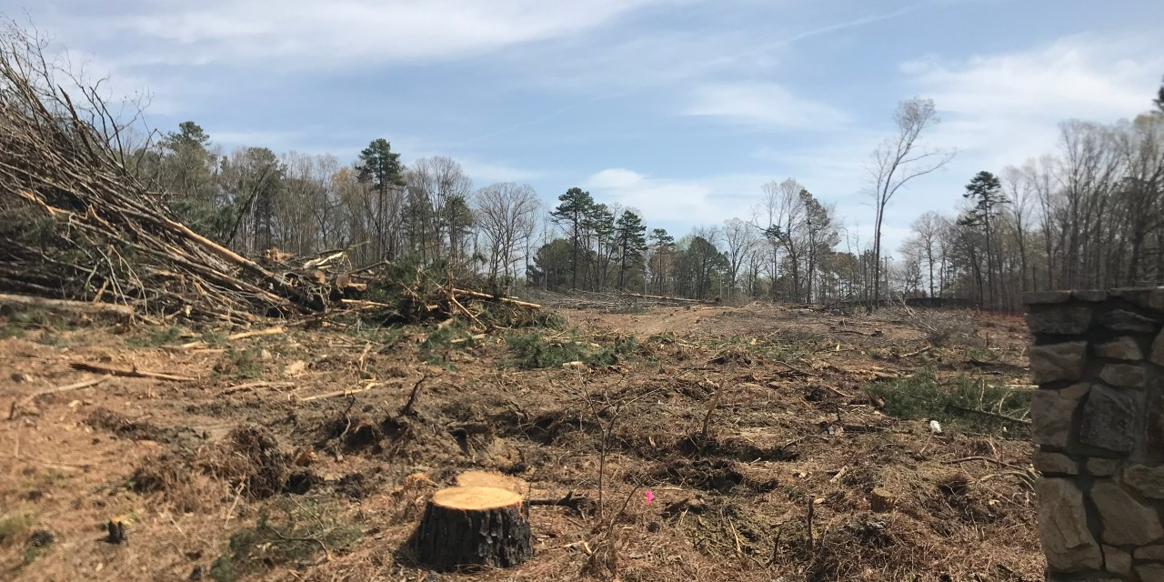Estes Drive Clear Cutting Sparks Concern from Chapel Hill Residents