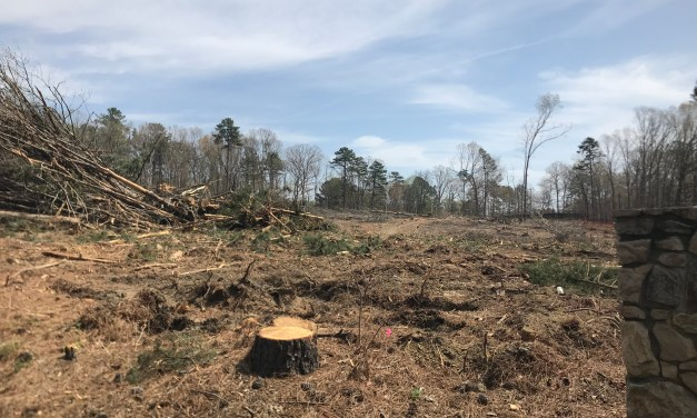 Chapel Hill Mayor Calls Clear Cutting of Trees on Estes Drive 'Heartbreaking'