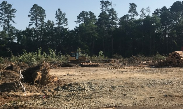 Chapel Hill Advocacy Group Holding Public Forum Amid Clear Cutting of Trees