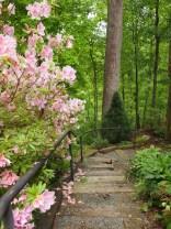 Lazarus Garden Steps To Shade Garden