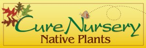 Cure Nursery