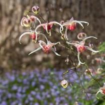 kuehnle-rosina-garden-9_34555443253_o