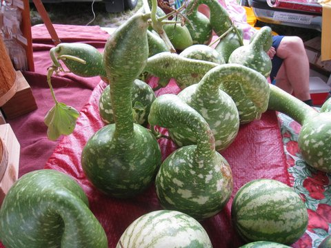 Carrboro NC Farmers Market-009