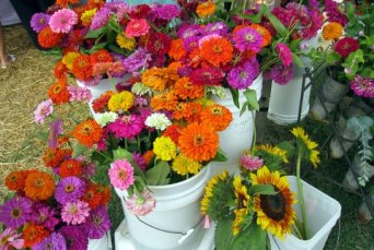 Carrboro NC Farmers Market-012