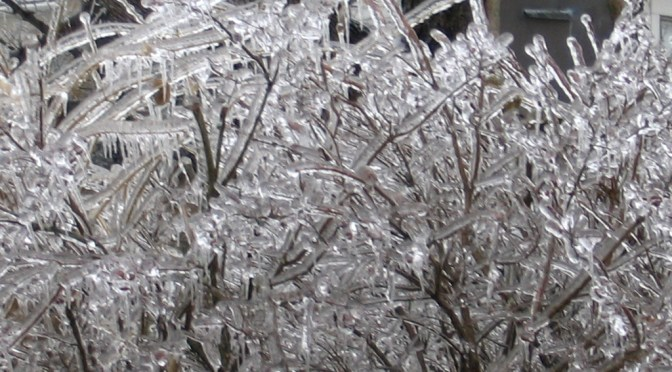 Remembering the 2004 Christmas Ice Storm