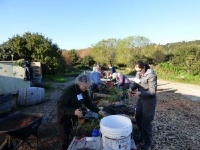 Local Plants - Monterey Bay Chapter - CNPS
