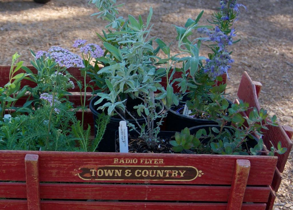 child's wooden red wagon filled with native plants in pots