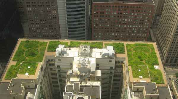 green roofs Chicago City Hall