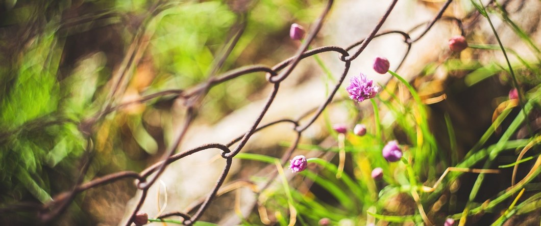 flowers fence - Q and A: Can Activated Charcoal help or exacerbate Hypoglycemic symptoms