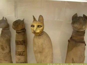 Momia de gato!