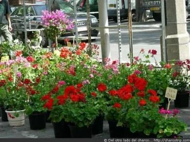 ArlesMercado flores