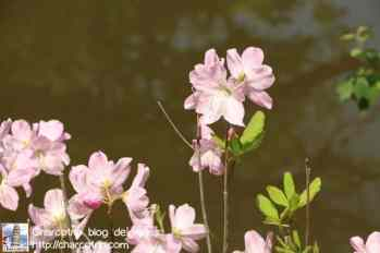Las flores del Jardin Secreto