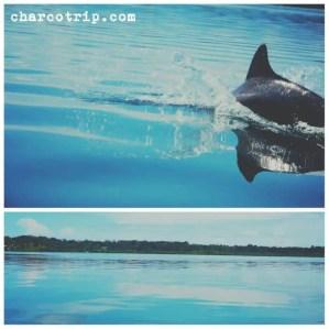agua-delfin-bocas-del-toro