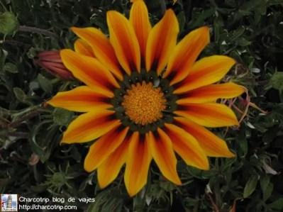Una flor solar