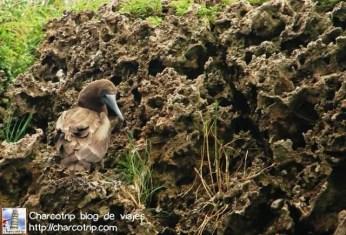 ave-isla-pajaros-bocas-del-toro