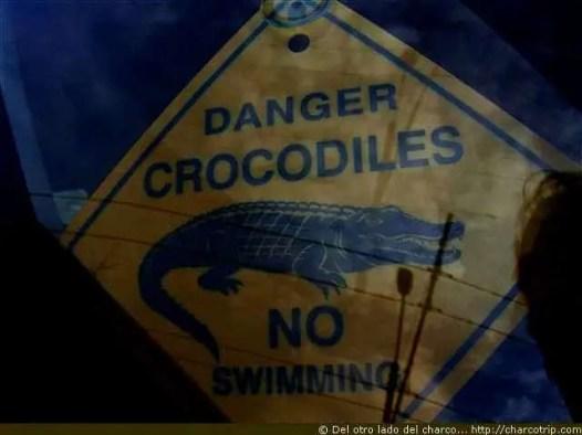 Cuidado cocodrilos, es broma!