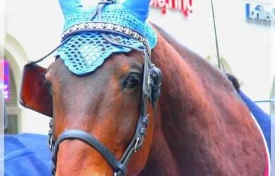El caballo de Viena