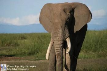 elefante32