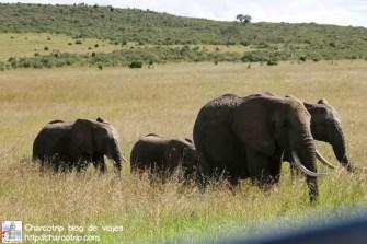 familia-elefantes-masai-mara
