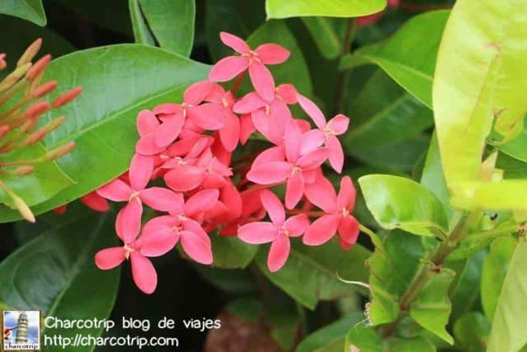flores-panama-4