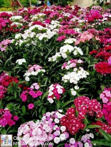 Mas flores