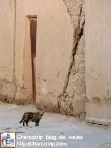 gato-calle-yazd