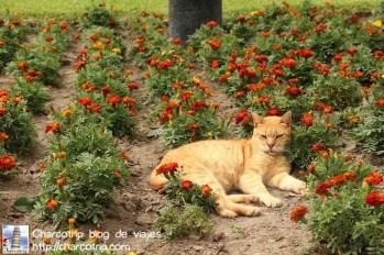 Gato entre las flores