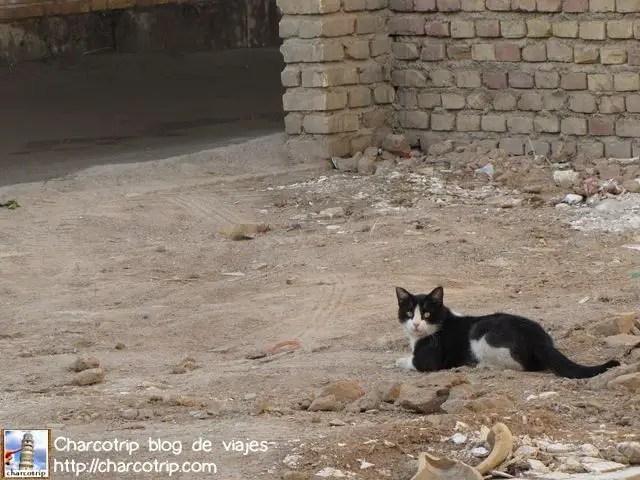 Y los gatos siempre andan por todas partes