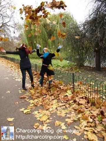 hojas-st-james-park
