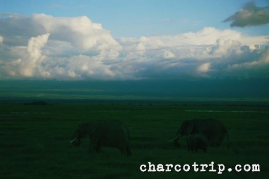 kilimanjaro-elefantes