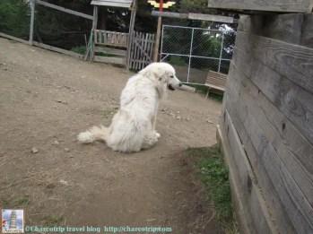 lamas-du-miradou-perrito