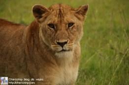 leonas-masai-mara2