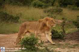 leonas-masai-mara5