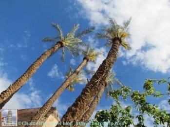 Lindas palmeras