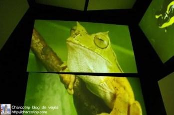 panamarama-rana-biomuseo-panama