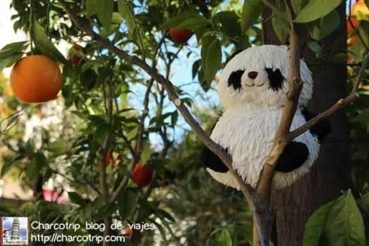 panda2-menton