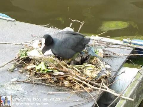 Bua, me acongojo ver a esta ave haciéndose un nido con ramas y basura :(